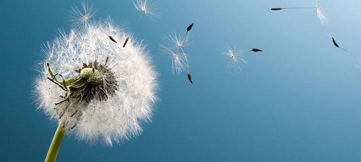 Content Atomisatie: wat is het: hoe werkt het?